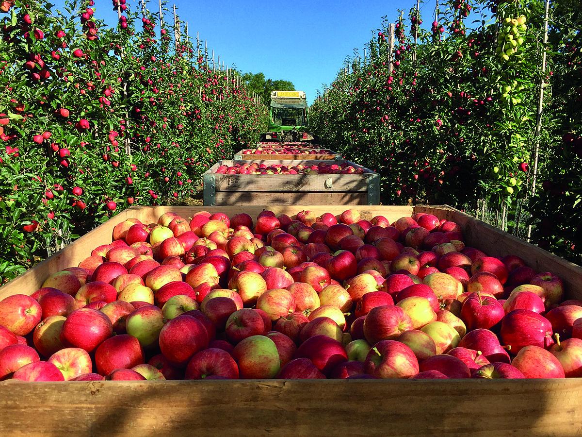 ACG Harvest